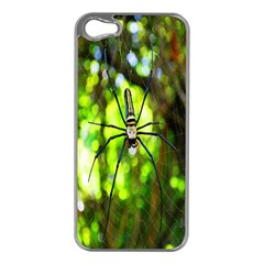 Spider Spiders Web Spider Web Apple iPhone 5 Case (Silver)