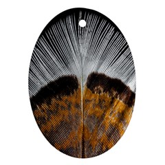 Spring Bird Feather Turkey Feather Ornament (Oval)