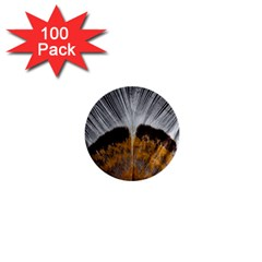 Spring Bird Feather Turkey Feather 1  Mini Buttons (100 Pack)