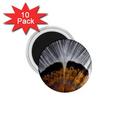 Spring Bird Feather Turkey Feather 1.75  Magnets (10 pack)