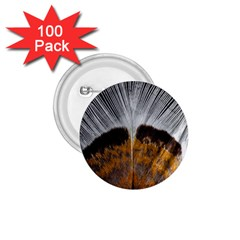Spring Bird Feather Turkey Feather 1 75  Buttons (100 Pack)