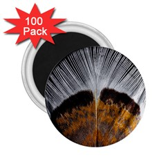 Spring Bird Feather Turkey Feather 2.25  Magnets (100 pack)