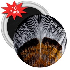 Spring Bird Feather Turkey Feather 3  Magnets (10 Pack)