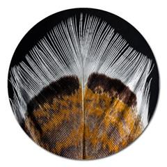 Spring Bird Feather Turkey Feather Magnet 5  (Round)