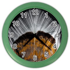 Spring Bird Feather Turkey Feather Color Wall Clocks