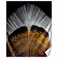 Spring Bird Feather Turkey Feather Canvas 11  x 14