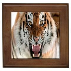 Tiger  Framed Tiles