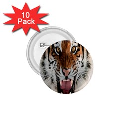 Tiger  1 75  Buttons (10 Pack)