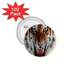 Tiger  1 75  Buttons (100 Pack)