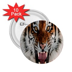 Tiger  2.25  Buttons (10 pack)