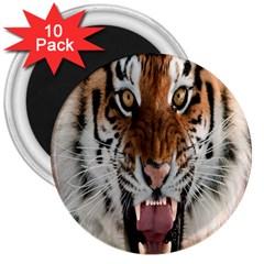 Tiger  3  Magnets (10 Pack)