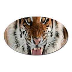 Tiger  Oval Magnet