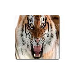Tiger  Square Magnet