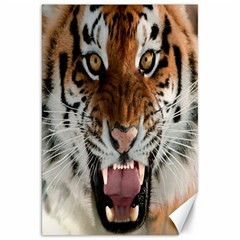 Tiger  Canvas 20  x 30