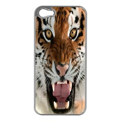 Tiger  Apple Iphone 5 Case (silver)