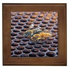 Worker Bees On Honeycomb Framed Tiles