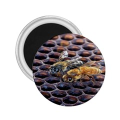 Worker Bees On Honeycomb 2 25  Magnets