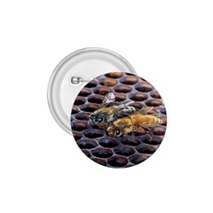 Worker Bees On Honeycomb 1 75  Buttons
