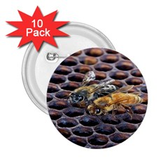 Worker Bees On Honeycomb 2.25  Buttons (10 pack)