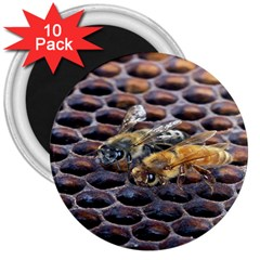 Worker Bees On Honeycomb 3  Magnets (10 pack)
