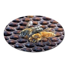 Worker Bees On Honeycomb Oval Magnet