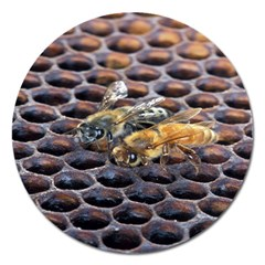 Worker Bees On Honeycomb Magnet 5  (Round)