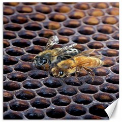 Worker Bees On Honeycomb Canvas 20  x 20