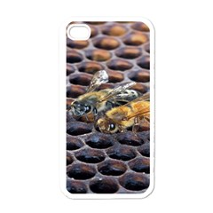 Worker Bees On Honeycomb Apple iPhone 4 Case (White)