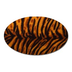 Animal Background Cat Cheetah Coat Oval Magnet