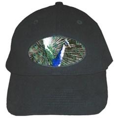 Animal Photography Peacock Bird Black Cap