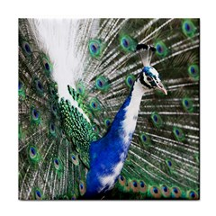 Animal Photography Peacock Bird Tile Coasters
