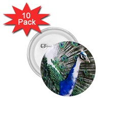 Animal Photography Peacock Bird 1 75  Buttons (10 Pack)
