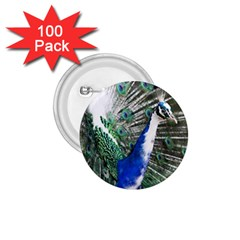 Animal Photography Peacock Bird 1 75  Buttons (100 Pack)