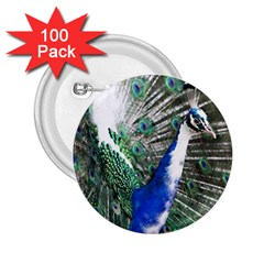 Animal Photography Peacock Bird 2 25  Buttons (100 Pack)