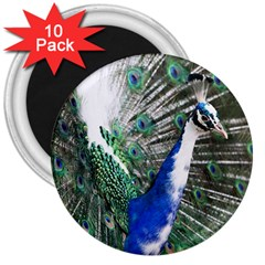 Animal Photography Peacock Bird 3  Magnets (10 Pack)