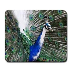 Animal Photography Peacock Bird Large Mousepads