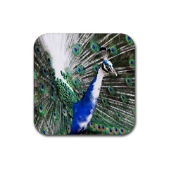 Animal Photography Peacock Bird Rubber Square Coaster (4 Pack)