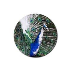 Animal Photography Peacock Bird Rubber Round Coaster (4 pack)
