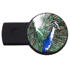 Animal Photography Peacock Bird USB Flash Drive Round (4 GB)