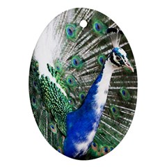 Animal Photography Peacock Bird Oval Ornament (two Sides)
