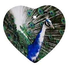 Animal Photography Peacock Bird Heart Ornament (Two Sides)