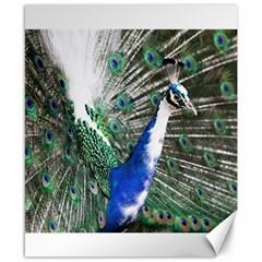 Animal Photography Peacock Bird Canvas 8  X 10