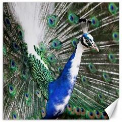 Animal Photography Peacock Bird Canvas 16  X 16