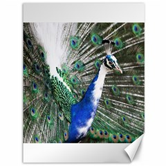 Animal Photography Peacock Bird Canvas 36  X 48