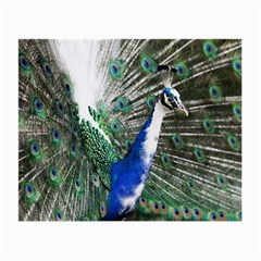 Animal Photography Peacock Bird Small Glasses Cloth (2 Side)
