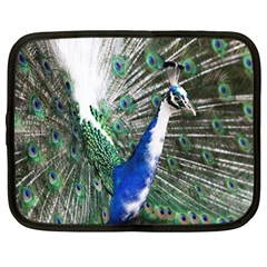 Animal Photography Peacock Bird Netbook Case (large)