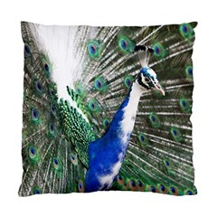Animal Photography Peacock Bird Standard Cushion Case (two Sides)