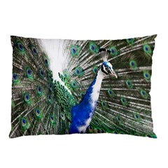 Animal Photography Peacock Bird Pillow Case