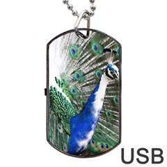 Animal Photography Peacock Bird Dog Tag Usb Flash (one Side)