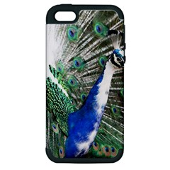 Animal Photography Peacock Bird Apple Iphone 5 Hardshell Case (pc+silicone)